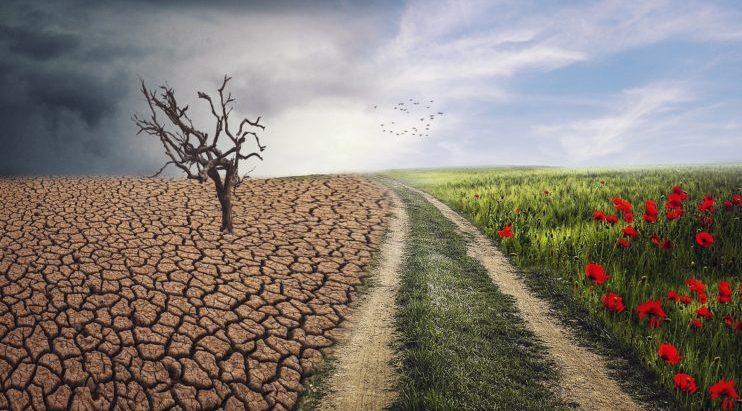 paisaje seco y verde